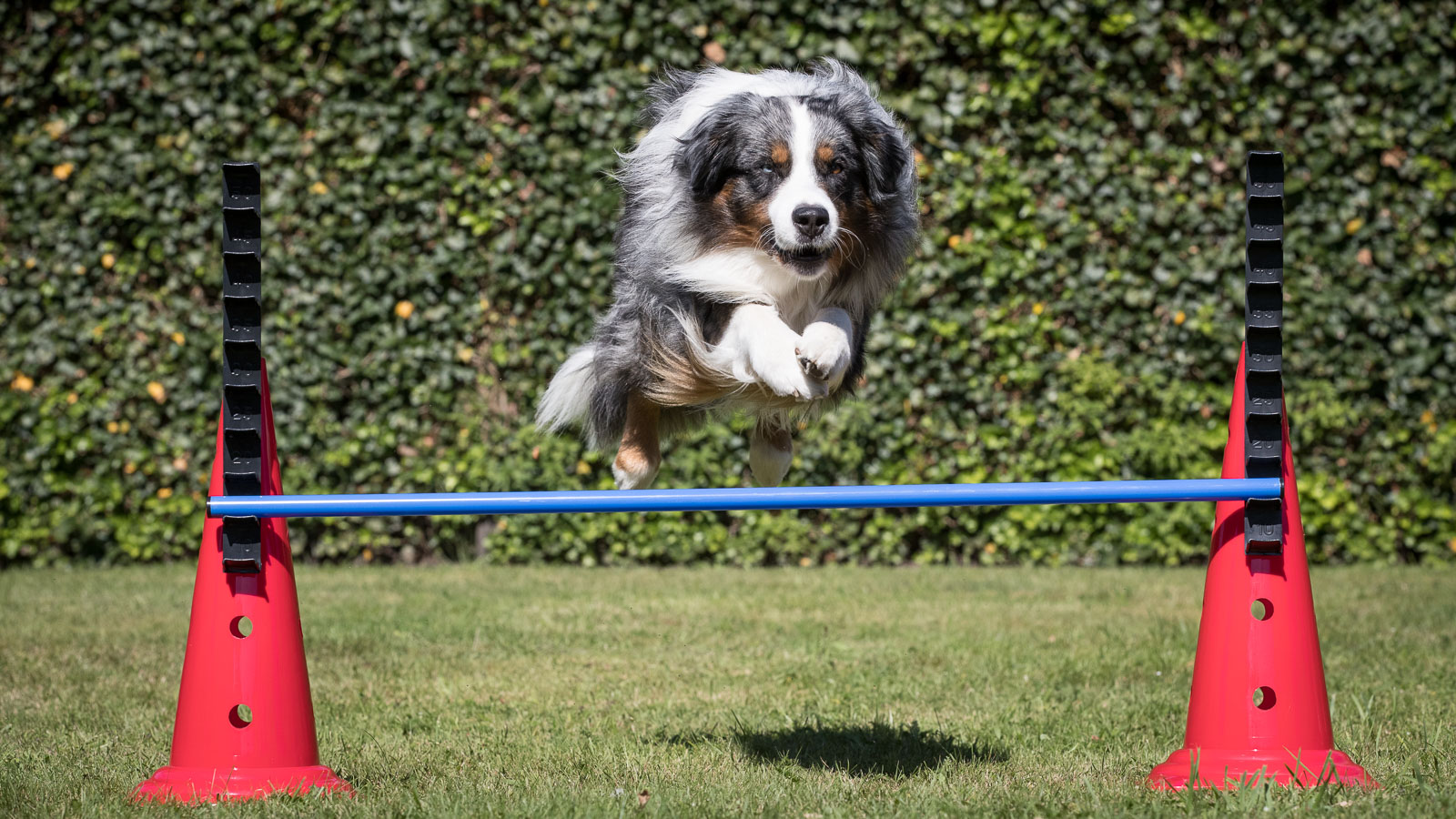 Super Warming-up en Cooling-down voor de hond - sportenspelvoordieren.nl QA-95