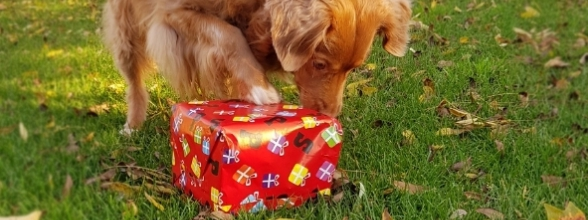 Sinterklaas krijgt een nieuwe hulppiet
