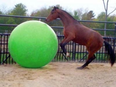 Paardenvoetbal 85, 95 en 120 cm met Burst Resistance System