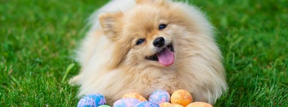 Ga jij met Pasen samen met je hond van een eitje genieten?