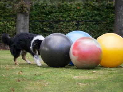 Treibball 65 cm